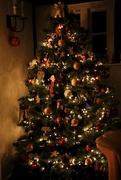 "20th Dec 2014 - ""I'm the happiest Christmas Tree!"""