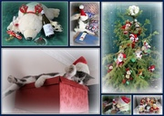 23rd Dec 2014 - Beary Catful Christmas Collage