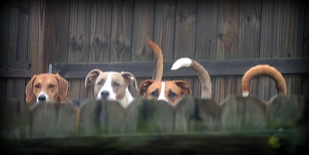 The neighbors are watching! by homeschoolmom