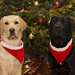 Christmas collars by boogie