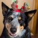 Christmas Oz by aecasey