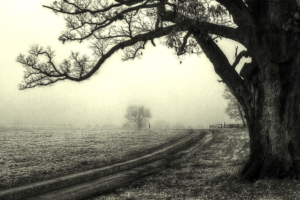 Enchanting Fog by sbolden