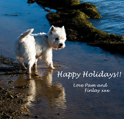 24th Dec 2014 - 24th December 2014 - Happy Holidays to you all!!