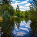 Aussie Xmas landscape! by gigiflower