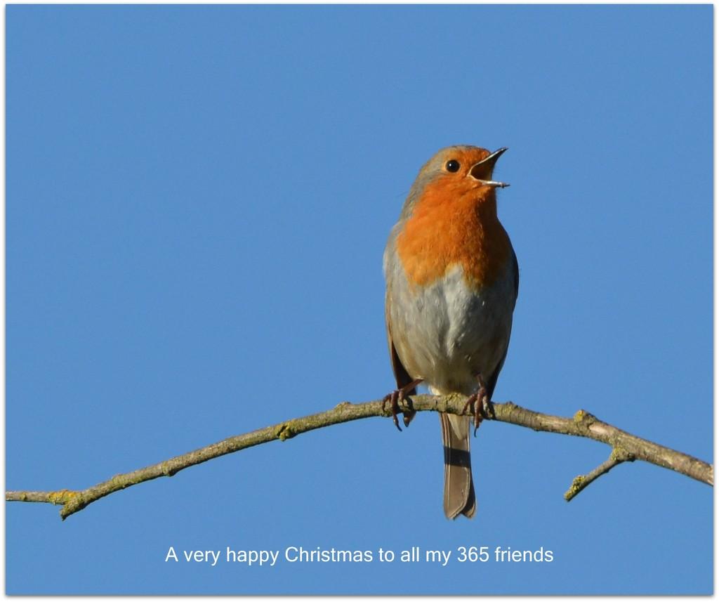 A very happy Christmas to my 365 friends by rosiekind