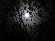 26th Oct 2010 - Moon