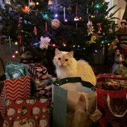 24th Dec 2014 - Kitty Under the Christmas Tree