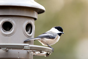 26th Dec 2014 - At the FEEDER!