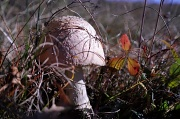 26th Oct 2010 - Poisonous mushroom