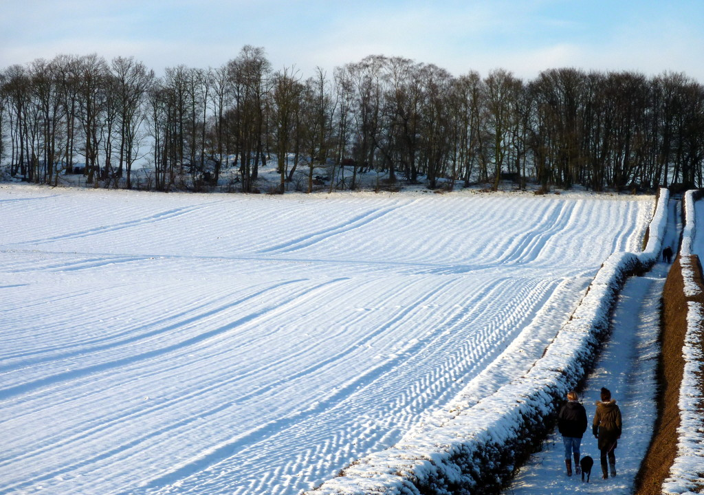 Let It Snow Let It Snow Let It Snow by phil_howcroft