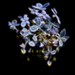 Electric Hydrangea  by cdonohoue