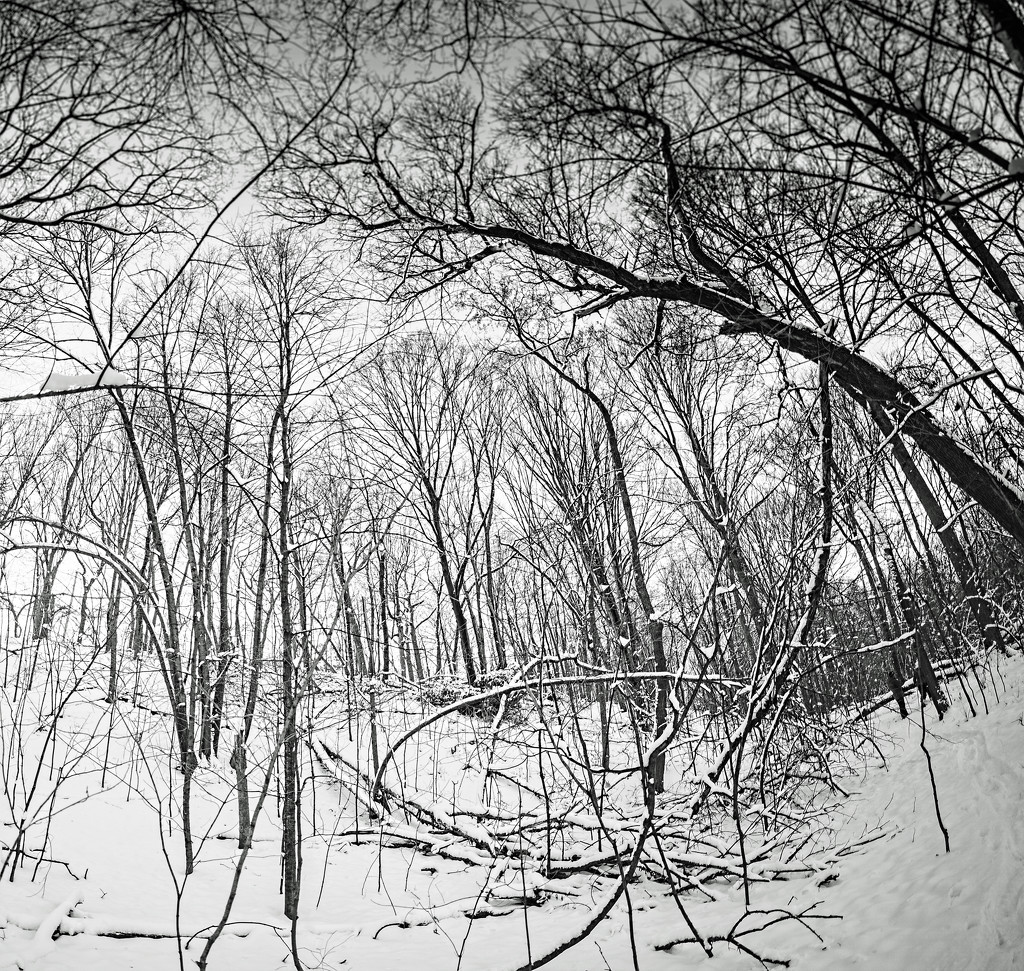 Trees and Snow by tosee
