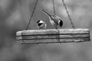 27th Dec 2014 - Do you have birdseed?