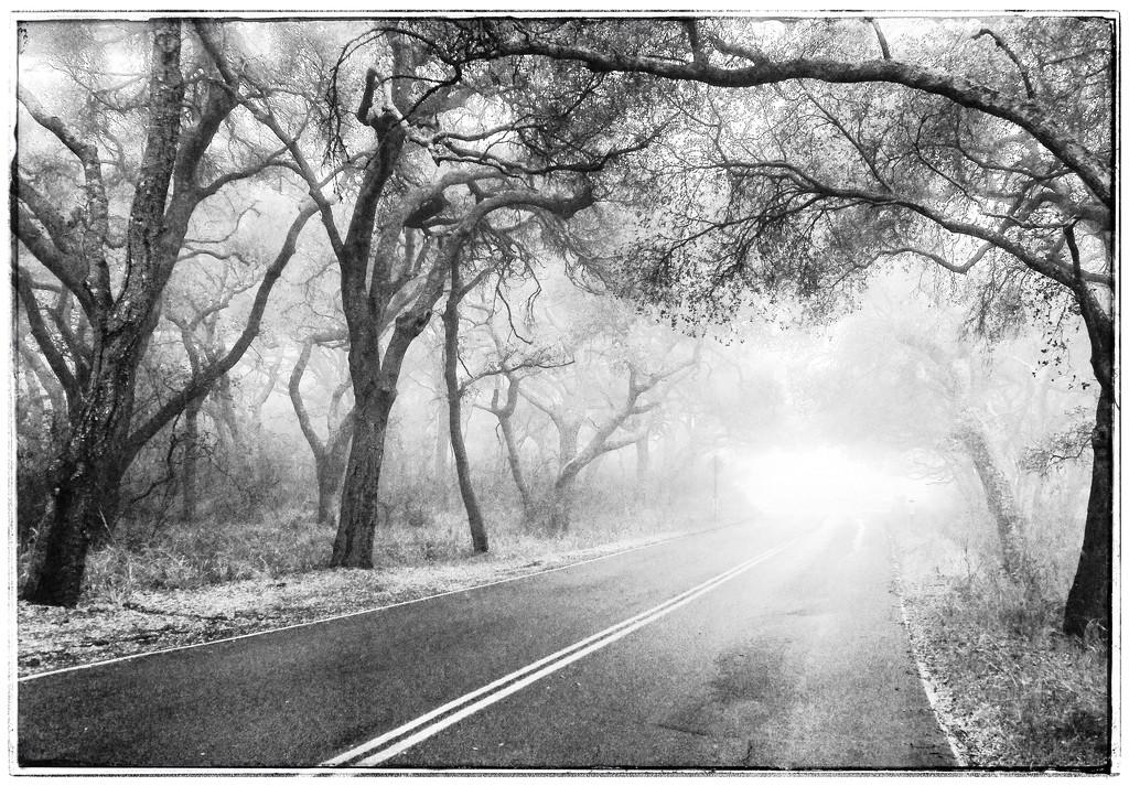 Into the Light by pixelchix