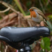 Robin on a bicycle seat by richardcreese