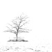 Snowstorm by shepherdmanswife
