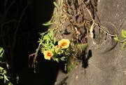 29th Dec 2014 - Little Yellow Flowers