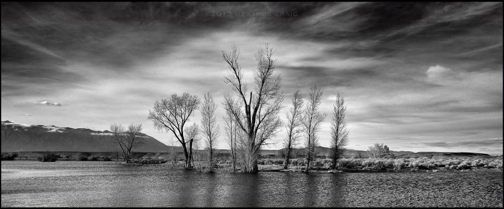 Farmer's Pond by pixelchix