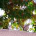 (Day 316) - The Bokeh Bird by cjphoto