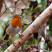 29th December 2014 - My little Robin - again!!