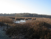 29th Dec 2014 - Frosty reed beds