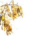 Seed Pods  by joysfocus