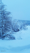 29th Dec 2014 - Winter wonderland