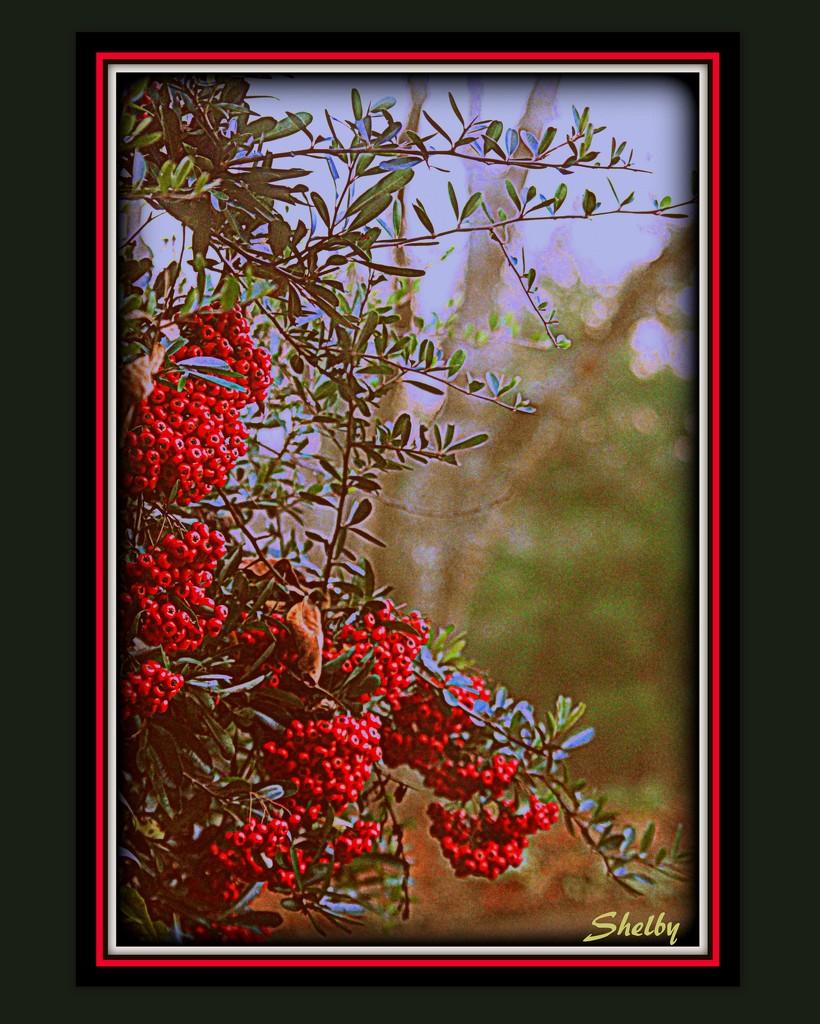 Bright Berry Bush by vernabeth