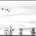 Flying Along Lake Shore Drive by ukandie1