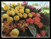27th Dec 2014 - Yellow Roses