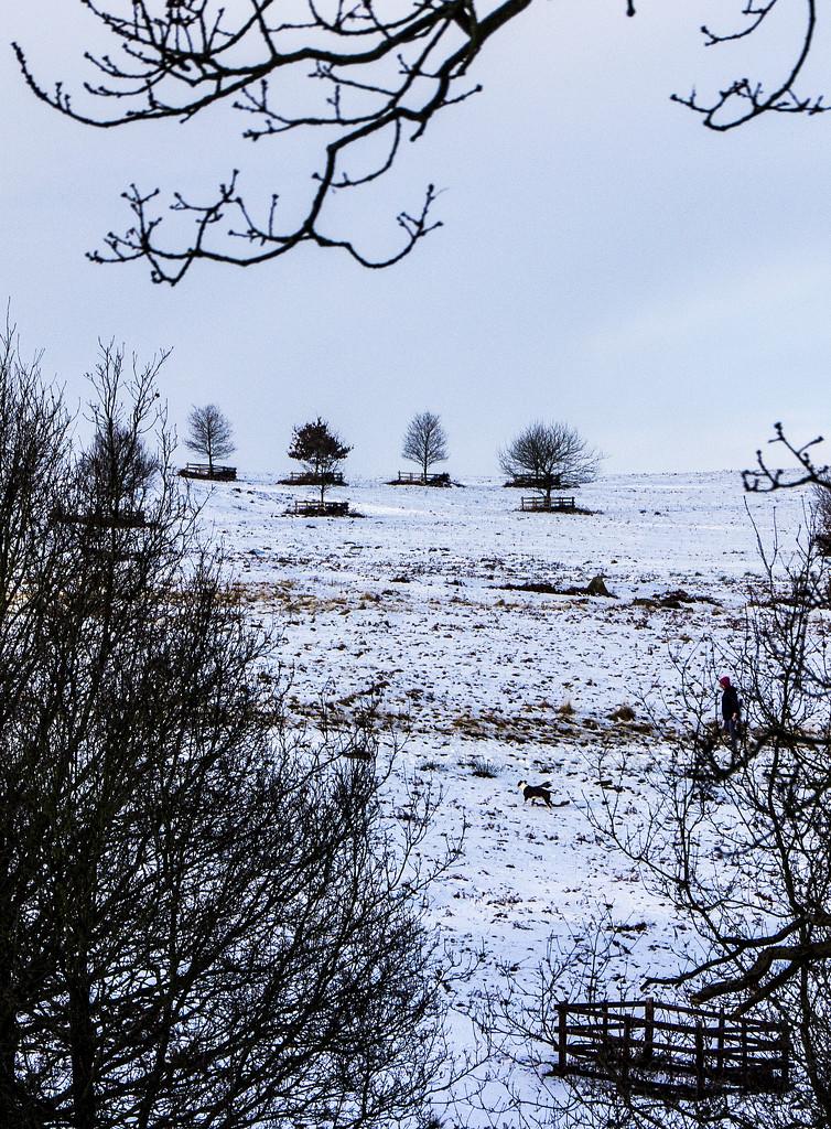 Leading the way in Bradgate Park by shepherdman