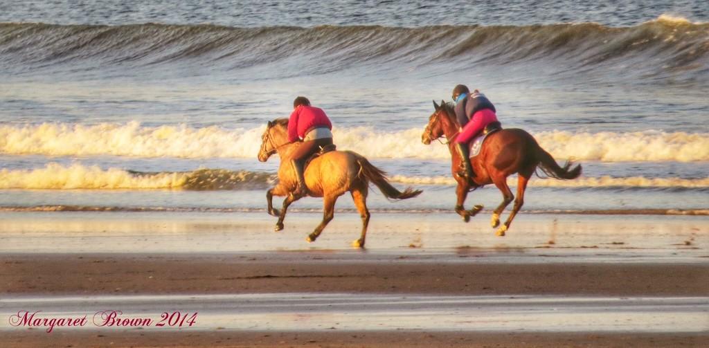 Gallop by craftymeg