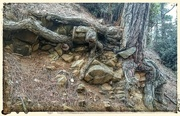 30th Dec 2014 - Rocks And Roots