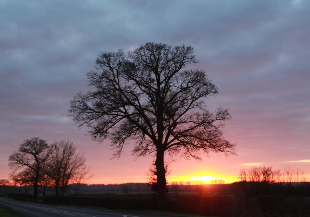 Cambridgeshire sunset by busylady