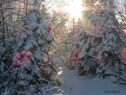 30th Dec 2014 - Winter Wonderland
