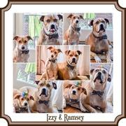 30th Dec 2014 - Izzy &Ramsey's Staycation