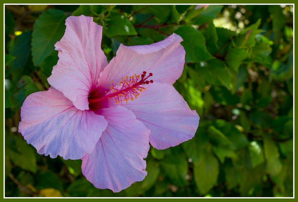 Pink flower by gosia