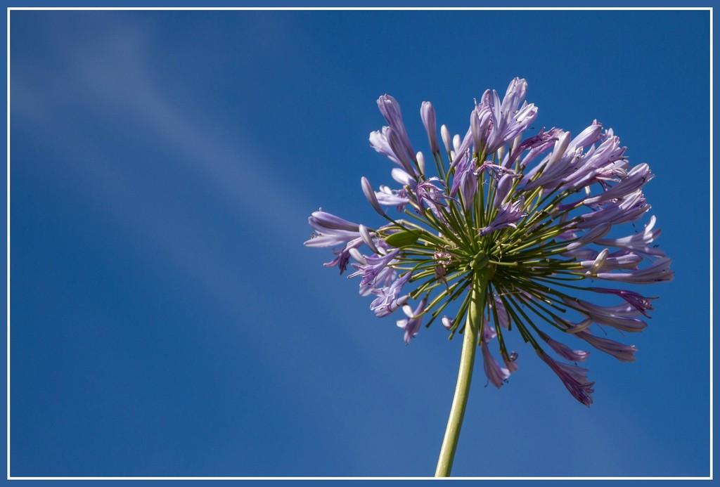 Purple flower by gosia