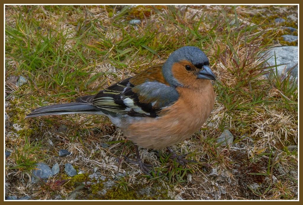 Bird by gosia