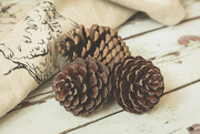 31st Dec 2014 - Pinecone study