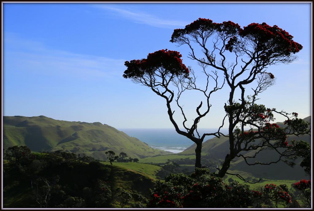 Awhitu Peninsula by dide