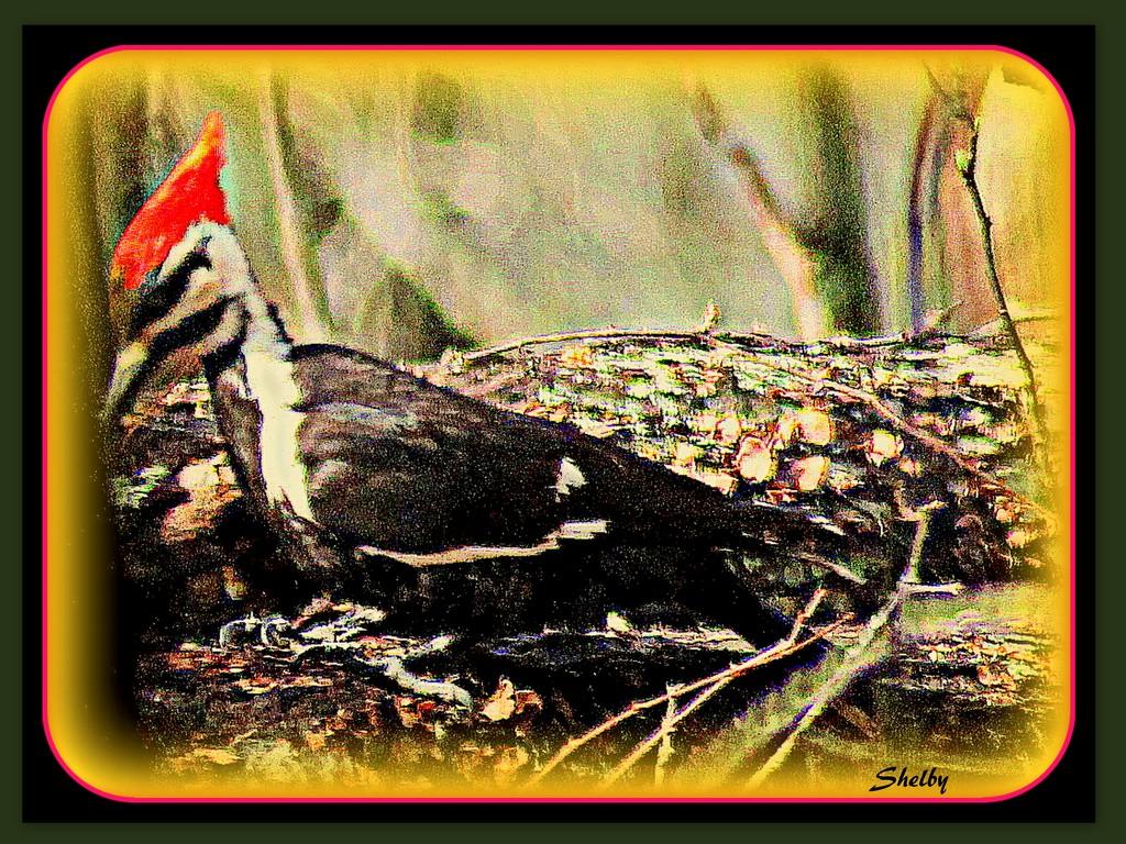 Big Bird by vernabeth