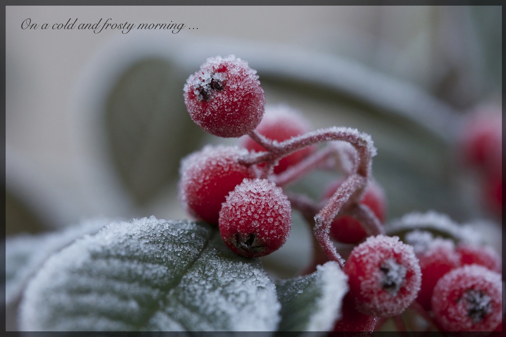 Cold and Frosty by jamibann