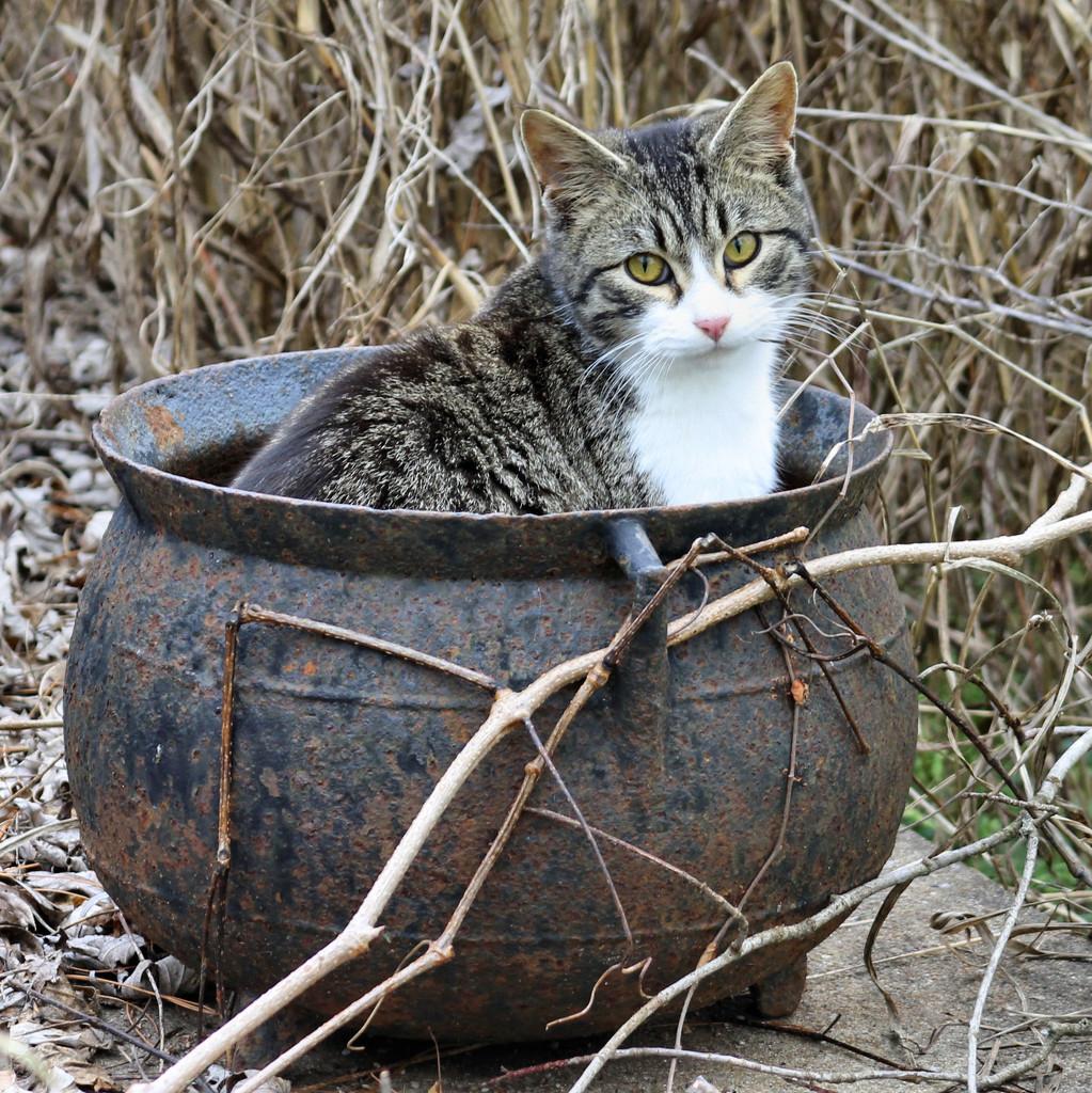 Cat soup? by cjwhite