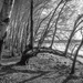 A Year of Days - A Photo Diary: Day 2 - Lakeside Trees by vignouse
