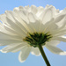 Flower by richardcreese