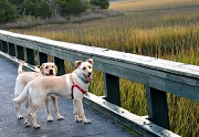 28th Oct 2010 - Walkin' The Dog (s)