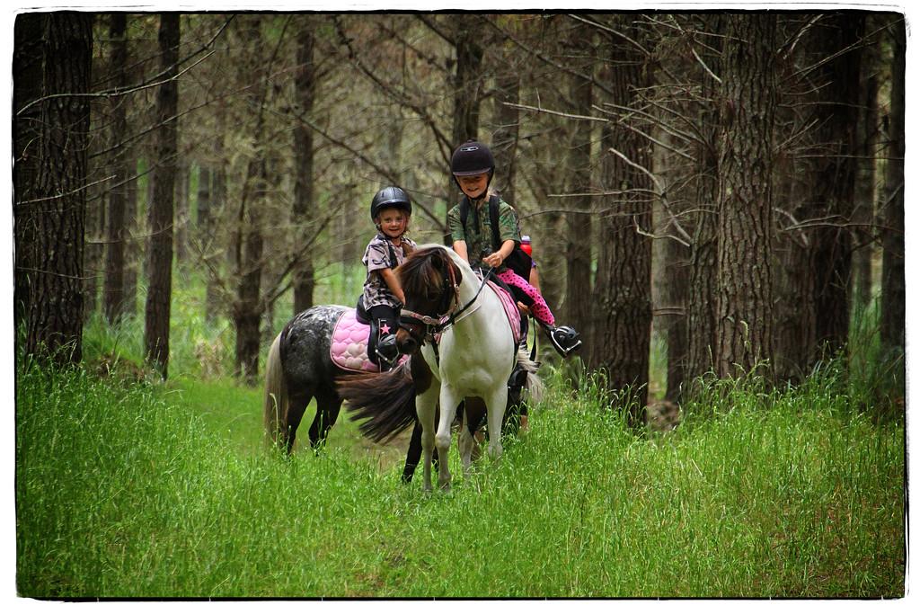 Treking in the forest by rustymonkey