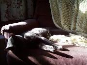 28th Oct 2010 - Sleeping in the Morning Sun
