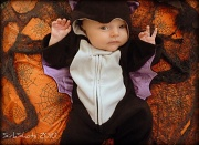 28th Oct 2010 - Baby Bat